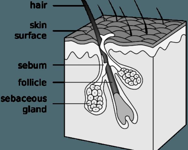 فولیوکول های مو